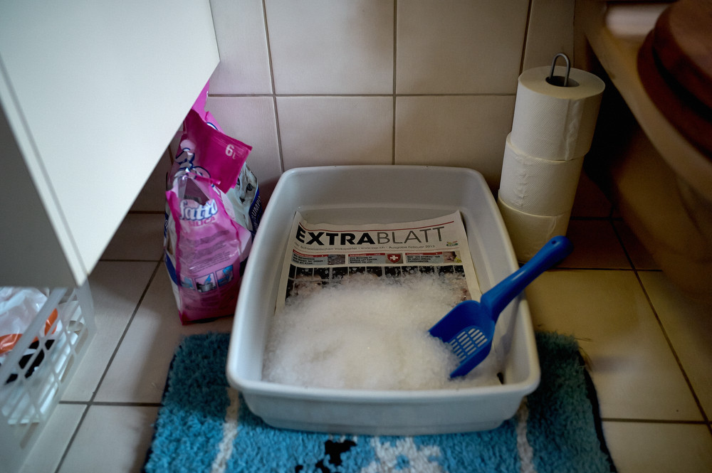 Foto: SVP-Abstimmungszeitung «Extrablatt» im Katzenkistchen