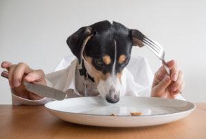 Bild: Hund, der mit Besteck aus einem Teller isst