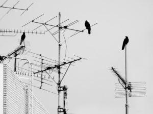Foto: Antennen, auf denen einzelne Krähen sitzen