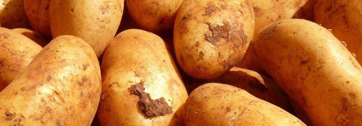Foto: Kartoffeln (ungeschält)