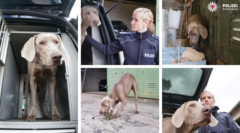 Foto: Kommissarin Lydia Marquardt mit Datenträger-Spürhund Ivo