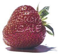 Foto: Einzelne Erdbeere