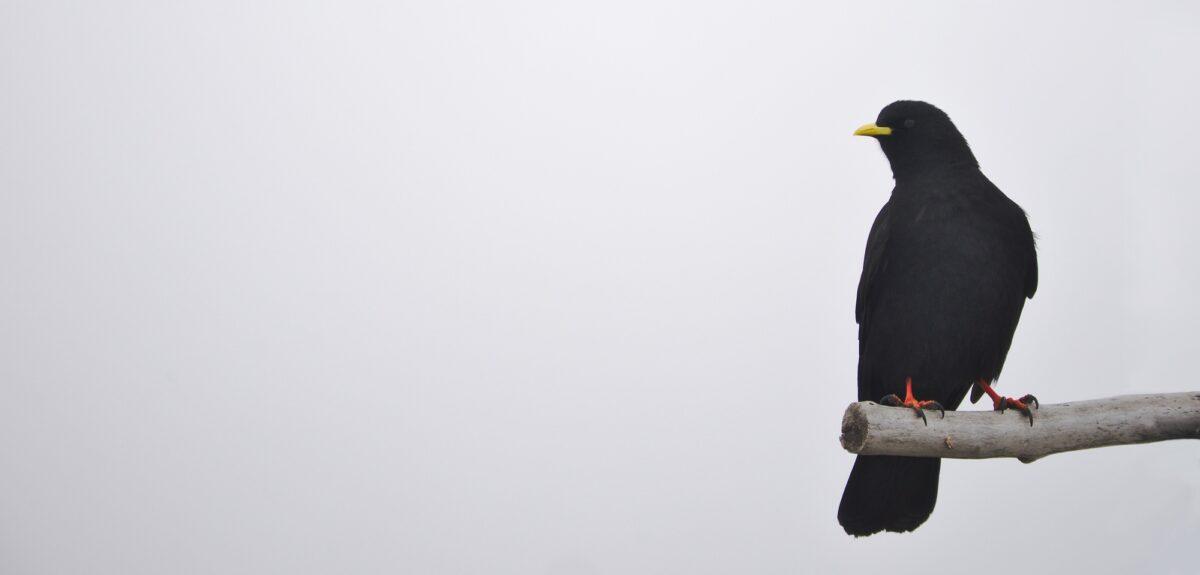 Foto: Einsamer Vogel